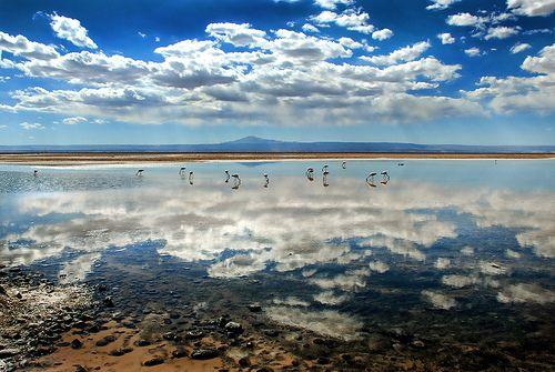 Laguna Chaxa // Desierto de Atacama Día 4