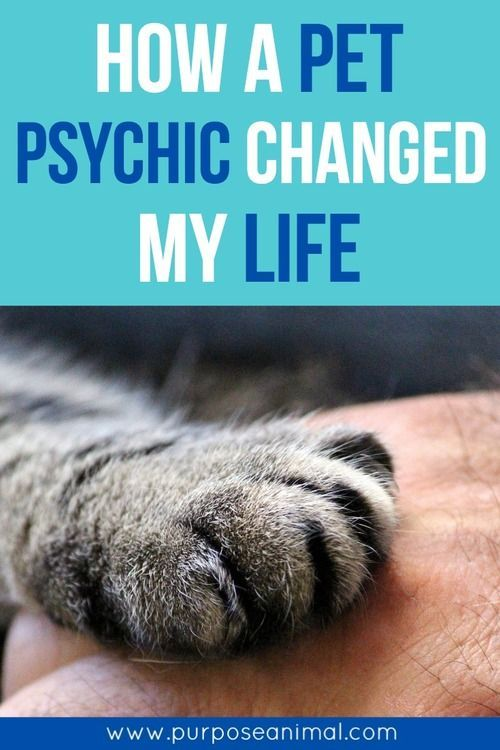 I wanted to share how a beautiful earth angel called Faye Rogers– changed my life.  I don't say this lightly.  I connected with Faye 5 years ago now and my world hasn't been the same since. Faye is an INTERNATIONAL Animal Communicator (Animal Psychic)