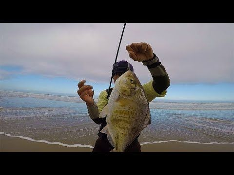 Oregon Coast Surf Fishing  - surf fishing tips to catch more fish