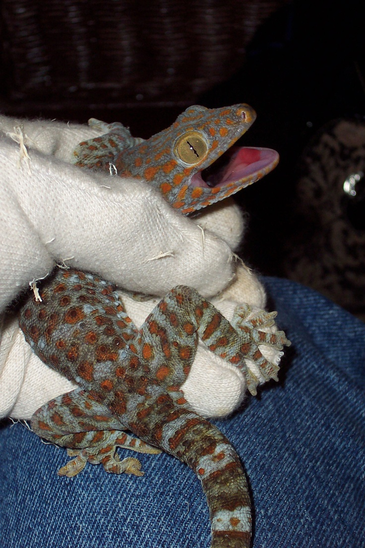 best snakes images on pinterest reptiles amphibians and combat
