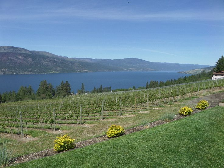 View from Arrowleaf Cellars #vineyard #vines #Okanagan #travel