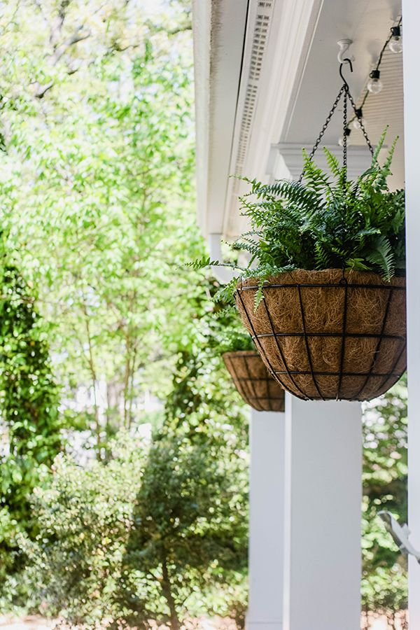 Clever idea for hanging Boston ferns: Leave them in their pots and snip the hangers off. Then just place them in the hanging planters with coco liners. This makes is super easy to remove them in the late fall, and you can reuse the liners next year. A great idea from Lesley Graham on The Home Depot Blog. || @lesleywgraham