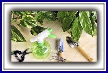 BRICOMANIACOS: Cuidados de las plantas de interior en vacaciones