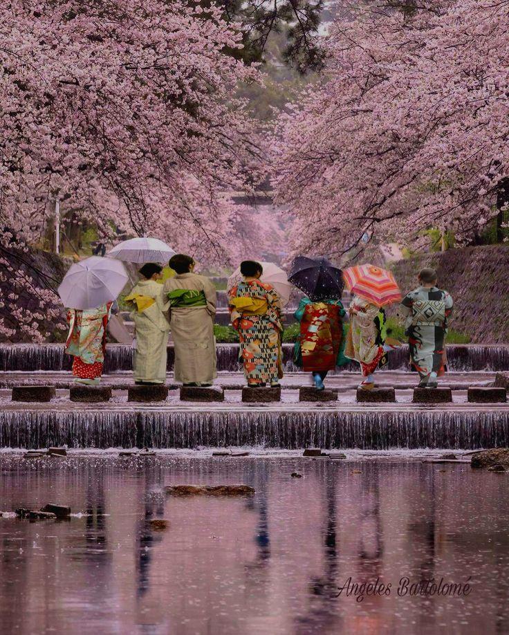 Parque Shukugawa que se encuentra en la ciudad de Nishinomiya, Perfecture de Hyogo. Ocupa 20.8 ha, espacio donde crecen 1660 árboles de cerezos