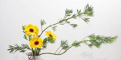 Japon çiçek düzenleme sanatına verilen isimdir  #ikebana #japonya #japonca #japanese #japon #japan #sanat