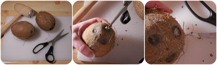 A kókuszdió előkészítése