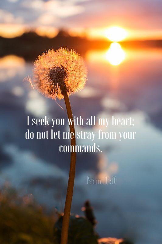 Minä etsin sinua kaikesta sydämestäni, älä salli minun eksyä pois sinun käskyistäsi. Psalmit 119:10 FB38
