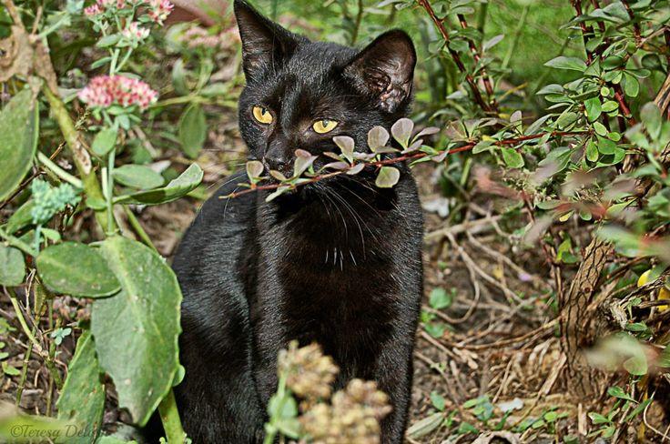 Delilah the #BlackCat #Photograph