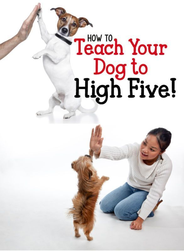 Dog Training 101 How To Train Your Dog Dog Training Training