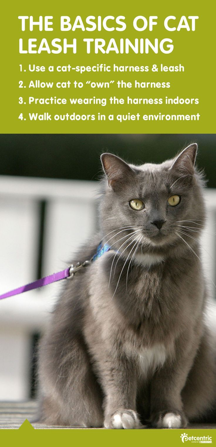 Felines can be trained to walk in harnesses and on leashes, just like dogs. All it takes is some gentle and patient cat training. Success is more likely if you start when your cat is a kitten, but if your cat doesn't enjoy it, there are plenty of other ways to have fun together!