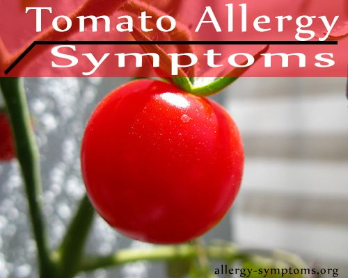 Tomato and tomato based products are most highly consumed food in the western part of the world. Despite the fact being widely used, you may suffer from tomato allergy symptoms. Reactions to tomatoes are not very common therefore tomato allergies are very rare. http://allergy-symptoms.org/tomato-allergy-symptoms/