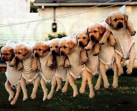 hihi, lollig:P honden drogen=O