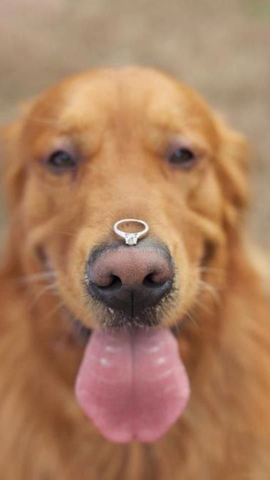 Dog Proposal Ideas - there are some beautiful rings in this list too!