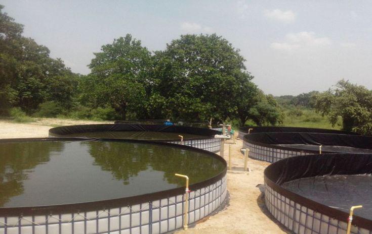 En el año 2015 fue desarrollado este proyecto en colaboración con varias empresas del sector para brindarle a 13 asociaciones de productores piscicolas en el departamento del Meta