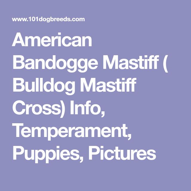 American Bandogge Mastiff ( Bulldog Mastiff Cross) Info, Temperament, Puppies, Pictures