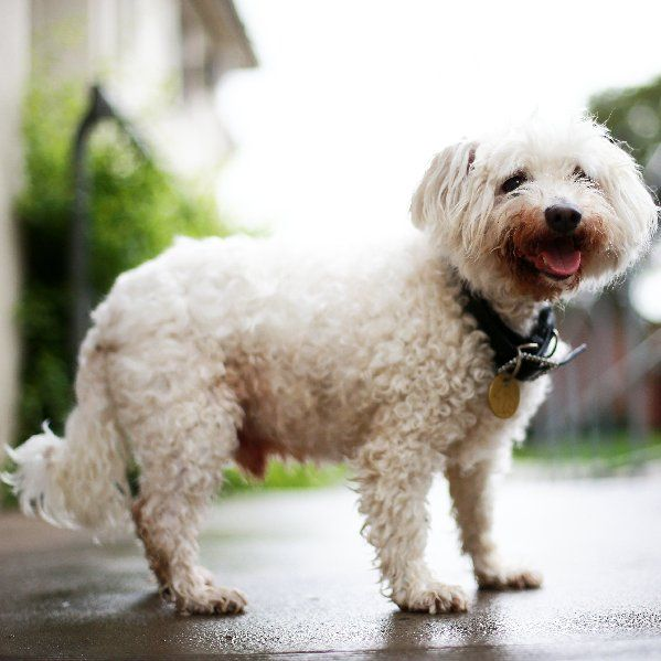 Sunshine would love a new home - check him out at the North Melbourne Lost Dogs home. http://dogshome.com/dog-adoption/adoptable-dog/?petID=985392