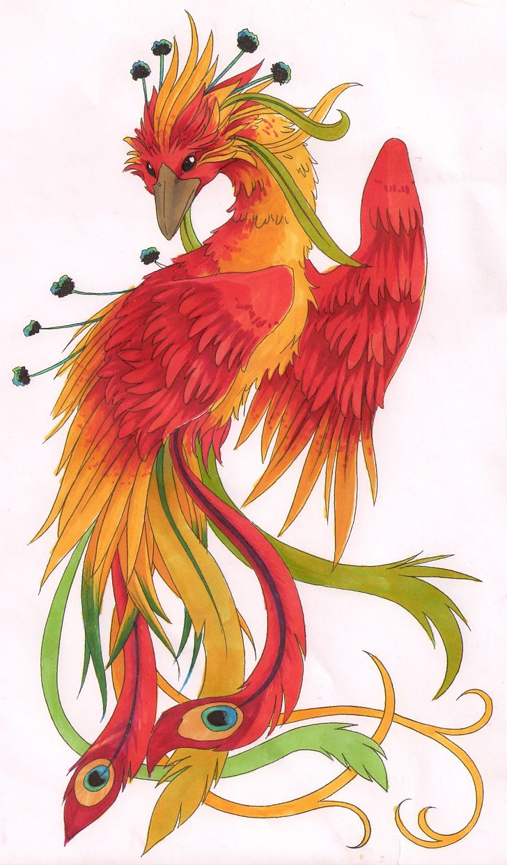 Colorful phoenix tattoo designs - So My Friend Sorta Wants Me To Design A Bigass Phoenix Tattoo For Her Instead Of Picking A Design Out Second Hand One Version I Tried Pose Was Nice