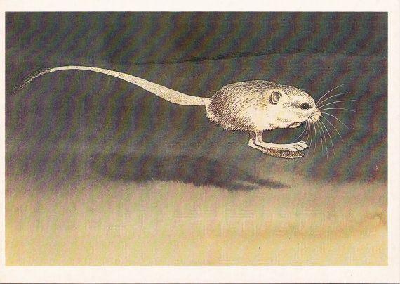 Postcard Illustration Jerboa  1985; So cute!