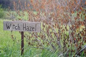 Witch Hazel Extract – a botanical extract that has potent antioxidant, anti-irritant, anti-inflammatory and anti-bacterial  properties