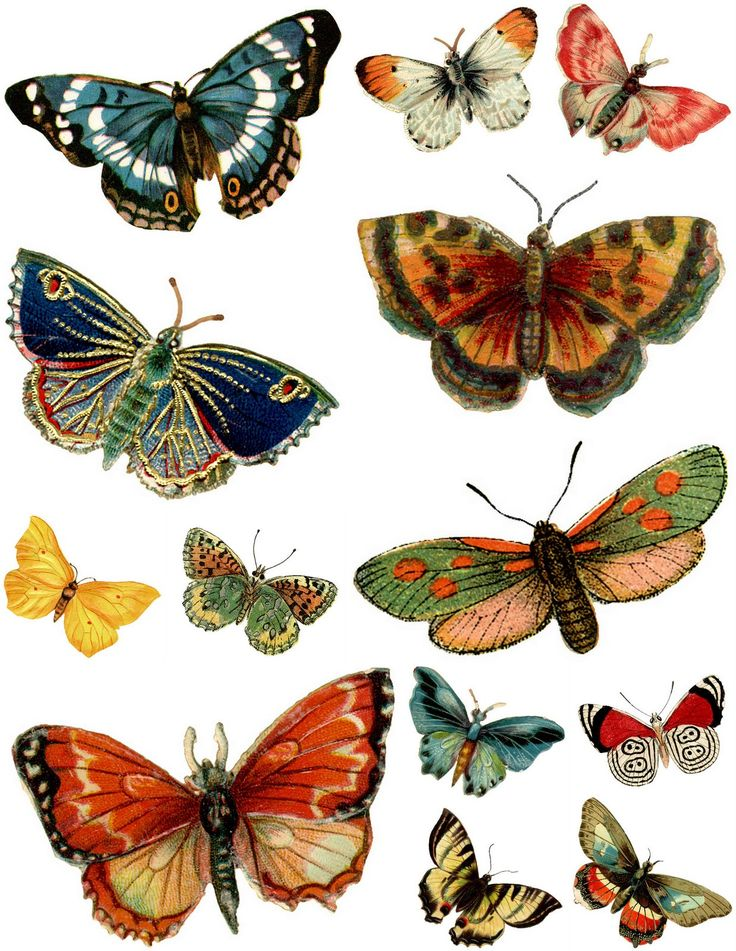 Free Printable Butterfly Decoupage Images