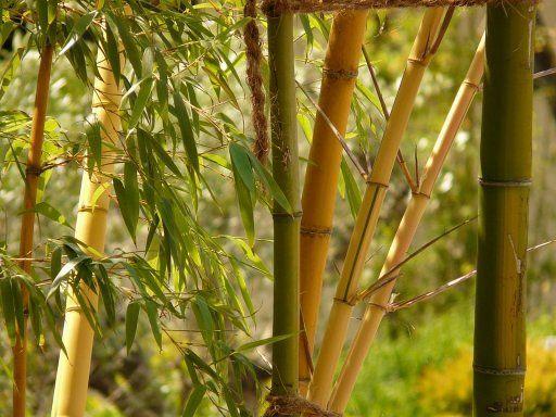 Las propiedades del Bambú