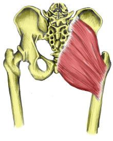 Weak glutes or not enough flexibility = A common problem in those with lower back pain or recurring thigh injuries is that the Gluteus Maximus muscle is inhibited and does not contract first, placing additional strain on the hamstrings. This delayed or reduced firing also results in a less stable sacroiliac joint which may account for lower back pain in some individuals.