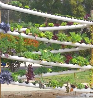 Great way to grow veggies in a small area.   http://www.thegoodsurvivalist.com/diy-hydroponic-garden-tower-lets-you-grow-over-100-plants-in-less-than-10-square-feet/