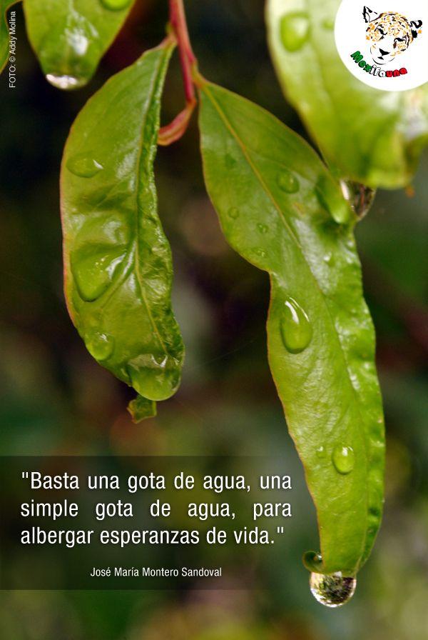 """""""Basta una gota de agua, una simple gota de agua, para albergar esperanzas de vida.""""  José María Montero Sandoval"""