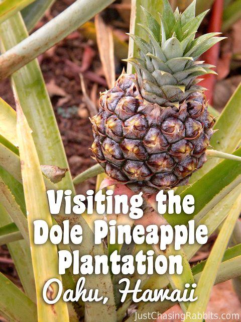 Visiting the Dole Pineapple Plantation- Oahu, Hawaii