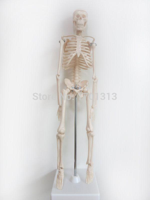 45 cm Hohe qualität menschliches skelett modell Spezielle dekoration Familie personifizierte dekorative Figuren scheletro umano