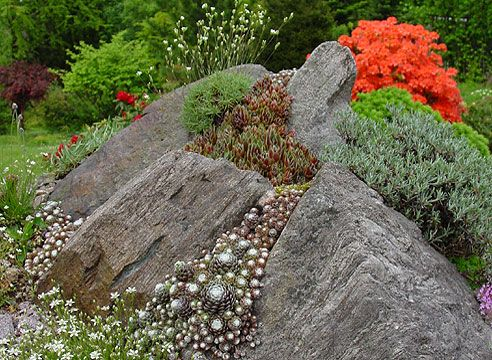 Посадка молодил с камнями. Сад Зденека Ржегачека.