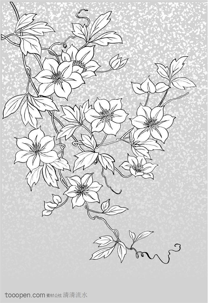 插画设计-藤蔓上的鲜花