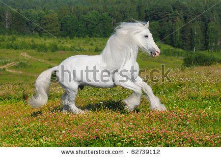 Horse White Stock foto´s, Horse White Stock fotografie, Horse White Stock afbeeldingen : Shutterstock.com