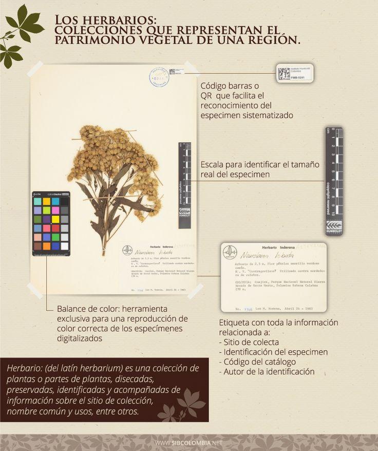 Los herbarios son colecciones biológicas que representan el patrimonio vegetal de una región.