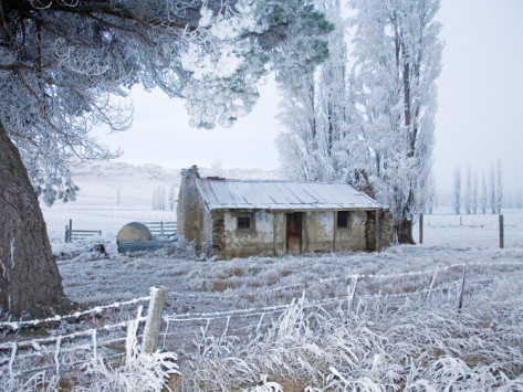 Sod cottage in hoar frost - Fruitlands.