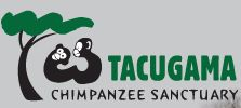 The Tacugama Chimp Sanctuary is located in the Western Rural area of Sierra Leone and was founded in 1995. It was built to protect and rehabilitate chimpanzees that had been captured, abandoned, or orphaned. They currently have over 100 chimps in the sanctuary.