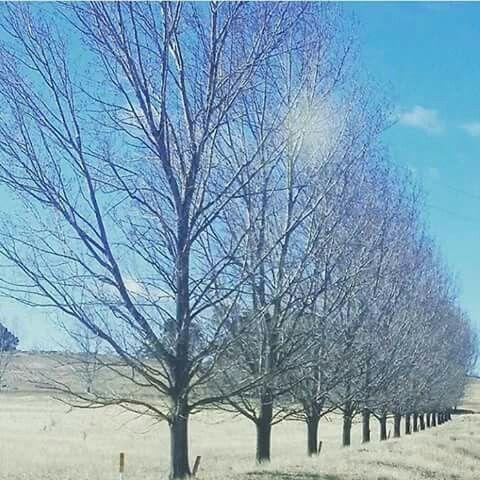A glorious winter day in Glen Innes. Photo by @kimberleymorg #destinationgleninnes #gleninnes #destinationnsw #visitnsw #travelinnsw #seeaustralia #newsouthwales