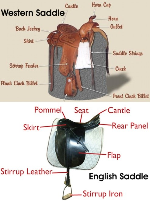 The Parts of the Western Saddle and the English Saddle.