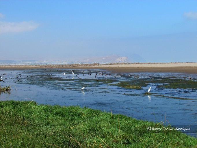 humedal del rio lluta - Buscar con Google