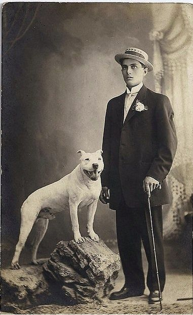 Gentleman and his Pitbull