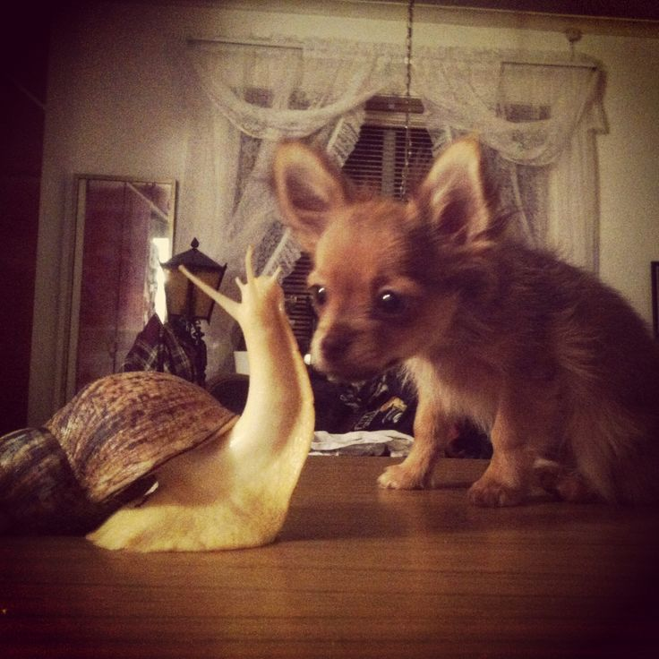 Snail and dog love