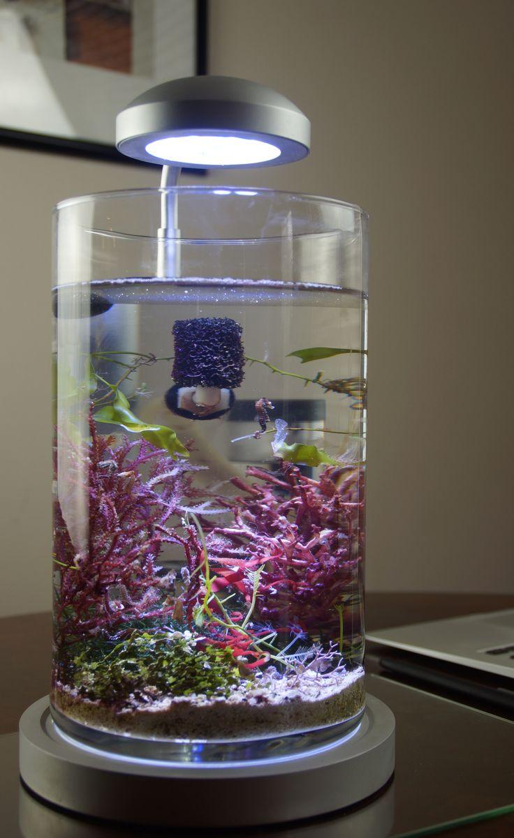 PJ reefs 2.0 allows anyone to keep a live seahorse. Now LIVE on Kickstarter.