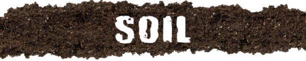 Bonsai Soil Basics: Part 1 – Nursery Tree Wholesalers