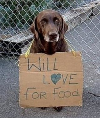 OMG just about broke my heart....wish I could adopt him this minute !: Rescue Dogs, Animal Shelters, Adoption A Dogs, Best Friends, Old Dogs, My Heart, Shelters Dogs, Chocolates Labs, Furry Friends