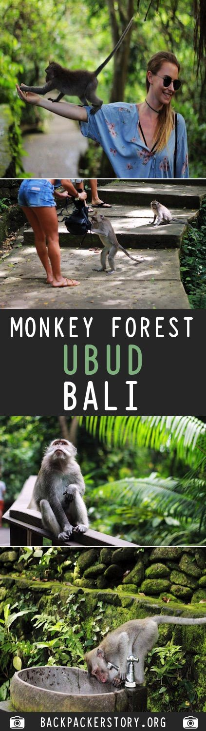 Guide: Ubud Monkey Forest