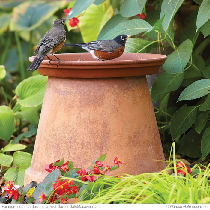 Affordable birdbath  You don't have to spend a lot to bring birds into the yard!  terra cotta container, pots, saucer