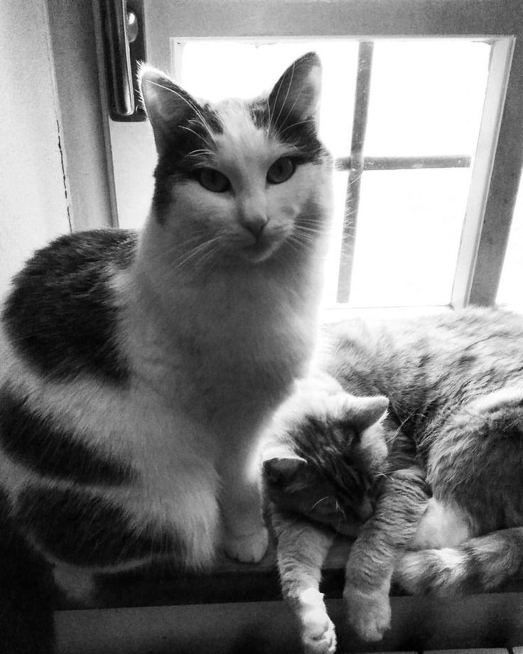 Friendly enemies 🐈❤ #cat #kitty #petsofinstagram #love #pet