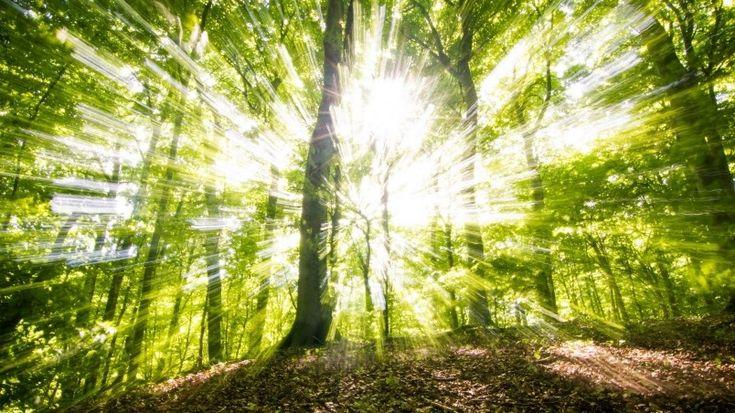 Sunny Green Forest Wallpaper