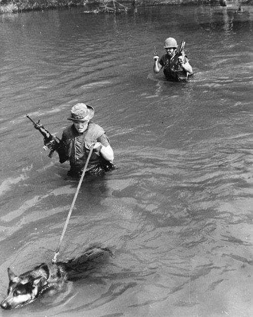 Vietnam 1970 #respect #usa #usairforce #usarmy #usnavy #usnavyseals #usrangers #usmc #usmarinescorps #uso #nationalguard #navy #blackshepherd #belgianmalinois #bocaomalinois #pastoraleman #k9unit #k9 #germanshepherdownerlv #GermanShepherd #gsd #womansoldier #worldwide #dutchshepherd #servicedog #soldier #specialforce #marinesdogs #marinescorps #army by german_shepherd_owner_lv