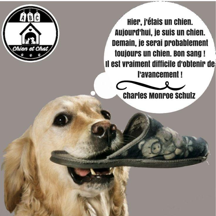 """Résultat de recherche d'images pour """"humour chien"""""""